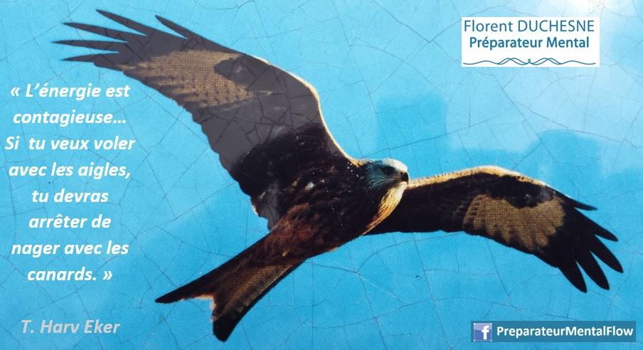 Citation L'énergie est contagieuse... Si tu veux voler avec les aigles, tu devras arrêter de nager avec les canards, T Harv Eker